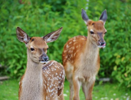 5 Ways to Prevent Deer from Damaging Your Property